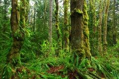 Foresta pluviale di nord-ovest pacifica Fotografia Stock Libera da Diritti