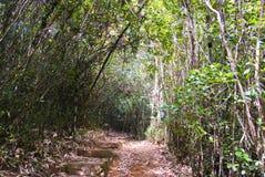 Foresta pluviale di Ranamafana Fotografia Stock
