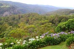 Foresta pluviale e agapanthus di fioritura nel parco nazionale di Tamborine del supporto, Australiaalong un percorso nel giardino Fotografia Stock Libera da Diritti