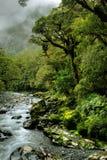 Foresta pluviale fertile Fotografie Stock Libere da Diritti