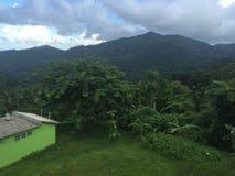 Foresta pluviale fertile Immagini Stock
