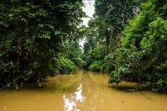 Foresta pluviale fertile lungo il tributario giallo dell'acqua del riv di Kinabatangan Fotografia Stock Libera da Diritti