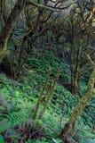 Foresta pluviale, La Gomera Fotografia Stock