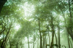 Foresta pluviale nebbiosa nella foschia, fuoco molle immagini stock libere da diritti