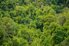 Foresta pluviale nel parco nazionale di Springbrook, Australia Fotografia Stock Libera da Diritti