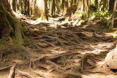 Foresta pluviale nell'isola di Vancouver, Columbia Britannica, Canada Fotografie Stock