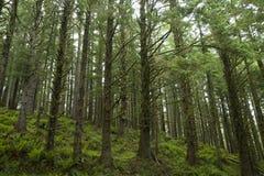 Foresta pluviale nell'Oregon Fotografia Stock Libera da Diritti