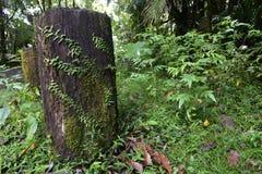 Foresta pluviale Nuovo Galles del Sud Nightcape fotografie stock libere da diritti
