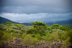 Foresta pluviale prima della tempesta Immagini Stock