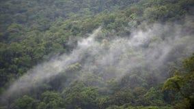 Foresta pluviale sotto la nuvola stock footage