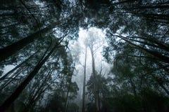 Foresta pluviale su una mattina nebbiosa Fotografia Stock Libera da Diritti