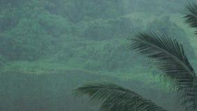 Foresta pluviale in Tailandia archivi video