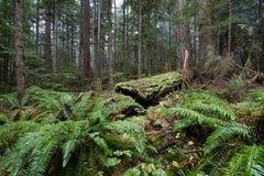 Foresta pluviale temperata Fotografie Stock Libere da Diritti