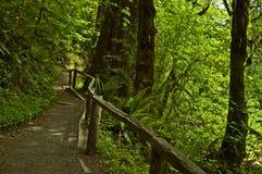 Foresta pluviale temperata Fotografie Stock