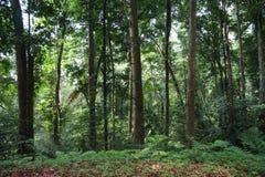 Foresta pluviale tropicale Immagini Stock