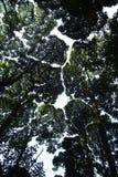 Foresta pluviale tropicale Immagine Stock Libera da Diritti