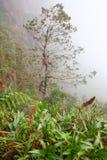 Foresta pluviale tropicale Fotografia Stock Libera da Diritti