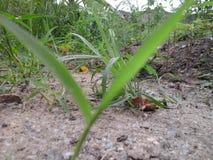 Foresta pluviale tropicale dell'Africa Occidentale fotografia stock libera da diritti