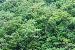 Foresta pluviale tropicale densa Immagine Stock