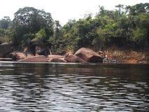 Foresta pluviale tropicale esotica in Amazona immagini stock libere da diritti
