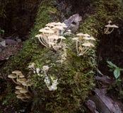 Foresta pluviale tropicale, Queensland, Australia Immagine Stock Libera da Diritti