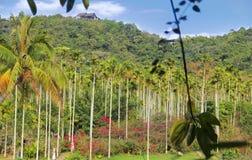 Foresta pluviale tropicale a Sanya, Cina immagini stock libere da diritti
