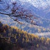 Foresta primaria Immagini Stock Libere da Diritti