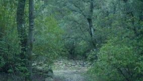 Foresta in primavera, Spagna