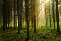 Foresta profonda Immagine Stock Libera da Diritti