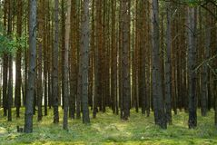 foresta profonda fotografia stock libera da diritti