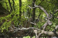 Foresta profonda Fotografie Stock Libere da Diritti