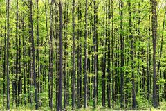 Foresta profonda Immagine Stock