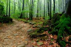 Foresta profonda Immagini Stock