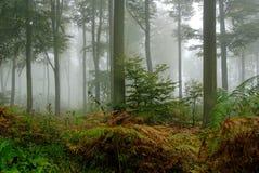 Foresta profonda immagini stock libere da diritti
