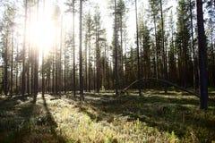 Foresta profonda Fotografia Stock