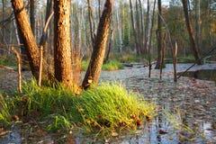 Foresta profonda con acqua Fotografia Stock Libera da Diritti
