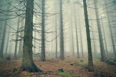Foresta profonda della montagna in nebbia densa Immagini Stock