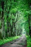 Foresta profonda di verde della molla Immagine Stock