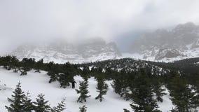 Foresta rampicante dell'alpinista