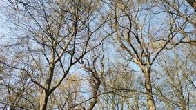 Foresta archivi video