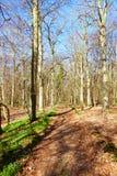 Foresta romantica Fotografia Stock