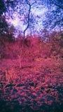 Foresta rossa Immagini Stock