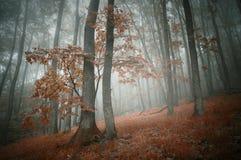 Foresta rossa in autunno con nebbia Fotografia Stock