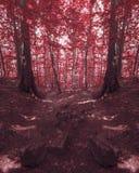 Foresta rossa con la strada di pietra sconosciuta Fotografia Stock