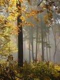 Foresta, Roztocze, Polonia fotografie stock libere da diritti