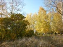 Foresta russa Fotografie Stock Libere da Diritti