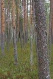 Foresta russa Immagini Stock