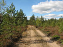 Foresta russa, autunno Fotografia Stock Libera da Diritti