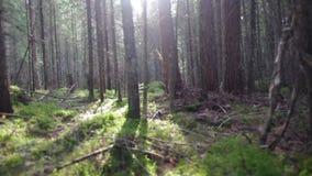 Foresta russa profonda stock footage