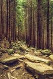 Foresta scandinava del nord Immagine Stock Libera da Diritti